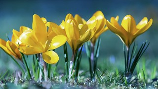 Choosing Your Spring Fun, a Warm Getaway for Everyone