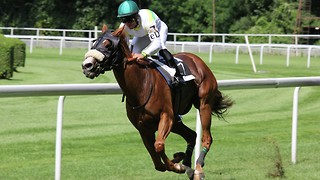 Rous Stakes is now under consideration because of Hurricane Ivor
