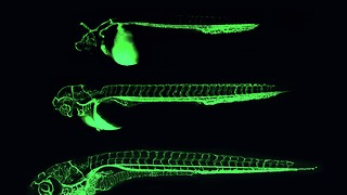 From A to Zebrafish: what a lab work placement really entails