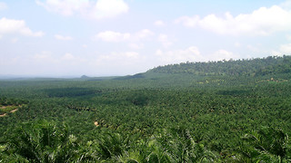 Palm oil, the other oil crisis